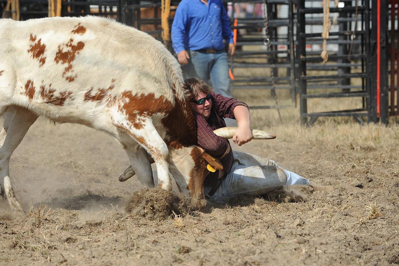 Bull Wrestling
